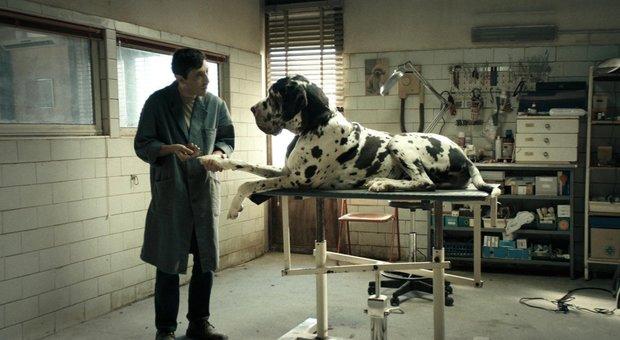 dogman2